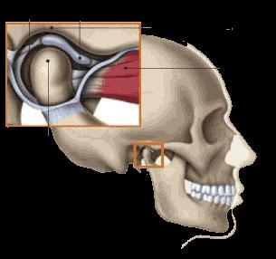 tmj-treatment-1-cosmetic-dentist-stephen-wolpo-dds-smile-sensations-implants-invisalign-gum-disease-stamford-ct